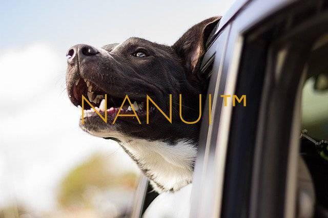 Nanui Shop MINI pet friendly: Tips for travelling with your pet https://nanui.shop/mini-pet-friendly-tips-for-travelling-with-your-pet/